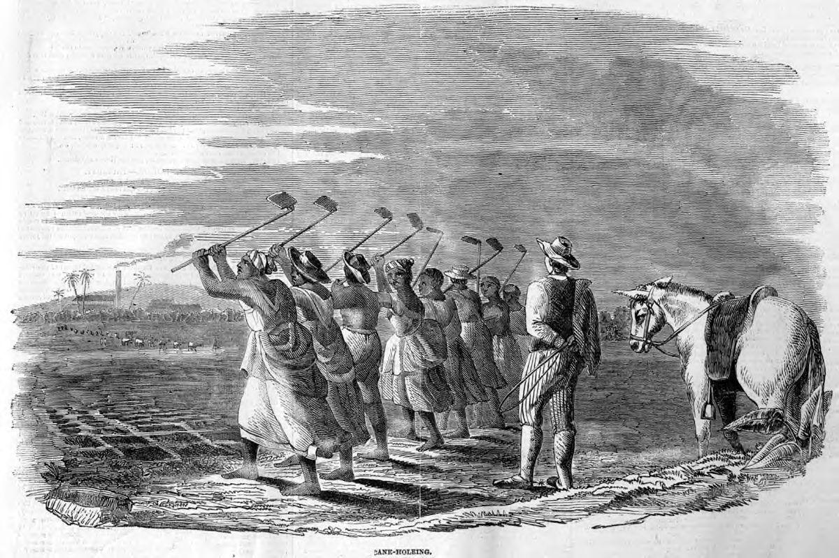 esclave dans les champs